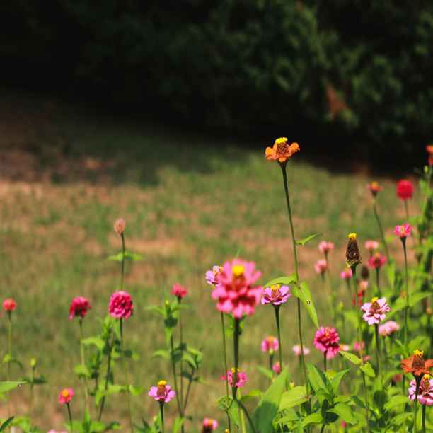 Beleggen en biodiversiteit stimuleren
